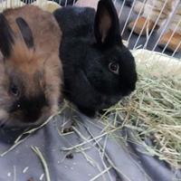 Adopt A Pet :: Littlefoot - Edmonton, AB