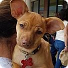 Adopt A Pet :: Mason