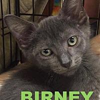 Adopt A Pet :: 5Birney - Delmont, PA