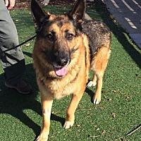 Adopt A Pet :: King - Newport Beach, CA