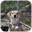 Photo 1 - Beagle/Labrador Retriever Mix Dog for adoption in Bel Air, Maryland - Trixie