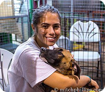 German Shepherd Dog/Belgian Malinois Mix Puppy for adoption in Miami, Florida - Jackson