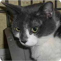 Adopt A Pet :: Zelda - Lombard, IL