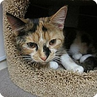 Adopt A Pet :: Jasmine - Warminster, PA