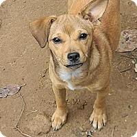 Adopt A Pet :: Roxanne - Ocala, FL