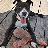 Adopt A Pet :: Ernie - Athens, GA