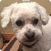Adopt A Pet :: Marley - La Costa, CA