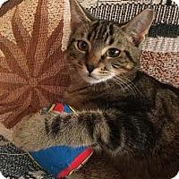 Adopt A Pet :: Kalamata - Merrifield, VA