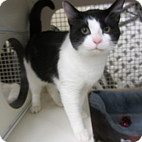 Adopt A Pet :: Waldo - Kingston, WA