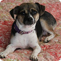 Adopt A Pet :: Rosie - Yuba City, CA