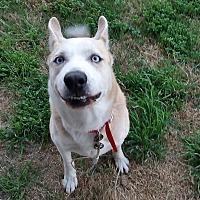 Adopt A Pet :: Dakota - Rowlett, TX