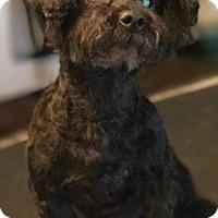Adopt A Pet :: Maxi - Trenton, NJ