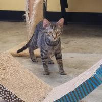 Adopt A Pet :: Wolfgang - Larned, KS