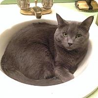 Adopt A Pet :: Dash150031 - Atlanta, GA