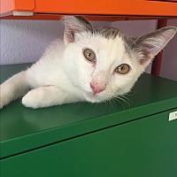 Adopt A Pet :: Karl - Los Angeles, CA