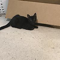 Adopt A Pet :: Shelley - Duluth, GA