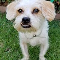 Adopt A Pet :: Hart - Los Angeles, CA