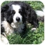 Photo 2 - Border Collie Dog for adoption in San Pedro, California - BANDYT