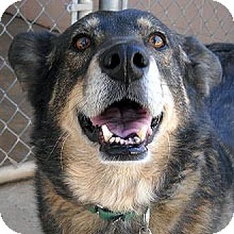 Shepherd (Unknown Type) Mix Dog for adoption in Phoenix, Arizona - Scarlet