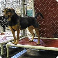 German Shepherd Dog Mix Dog for adoption in Jackson, Mississippi - Mea