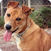 Adopt A Pet :: Moby - Athens, GA