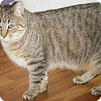 Adopt A Pet :: Leander - Kensington, MD
