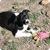 Adopt A Pet :: Bella - PENDING, in Maine - kennebunkport, ME