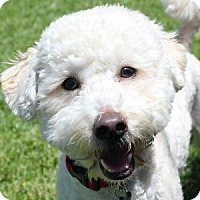 Adopt A Pet :: Sammy - La Costa, CA