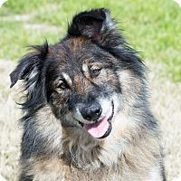 Adopt A Pet :: Ziggy - Patterson, CA