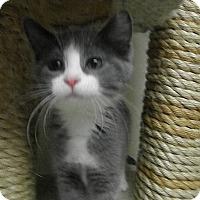 Adopt A Pet :: Cressida - Milwaukee, WI