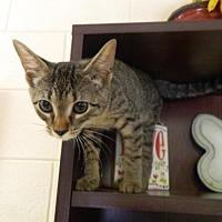 Adopt A Pet :: Betty - Randleman, NC
