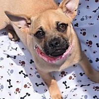 Adopt A Pet :: Lemon Meringue - San Diego, CA