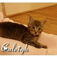Adopt A Pet :: Caleigh - Columbia, SC