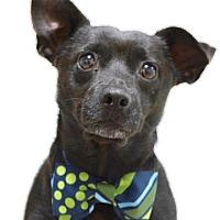 Adopt A Pet :: Newt - Dublin, CA