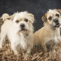Adopt A Pet :: Marley - Waco, TX