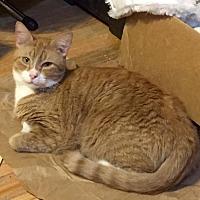 Adopt A Pet :: Uri (Uni) - Tampa, FL