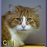 Adopt A Pet :: Cliff - Aldie, VA