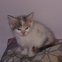 Adopt A Pet :: Urgent- Marigold - wayne, MI