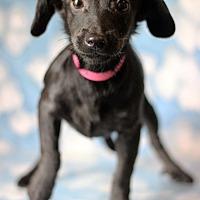Adopt A Pet :: Yepa - Waldorf, MD