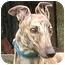 Photo 1 - Greyhound Dog for adoption in Tampa, Florida - Kiley