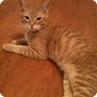 Adopt A Pet :: Reeses - Justin, TX