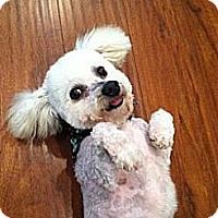 Adopt A Pet :: Charlie - Whittier, CA