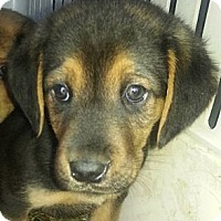 Adopt A Pet :: Jed(PENDING) - Chicago, IL