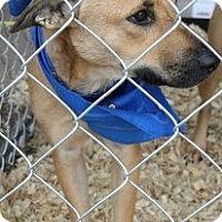 Adopt A Pet :: Thelma - Childress, TX