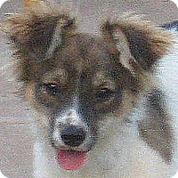 Adopt A Pet :: French Fry - Oakley, CA