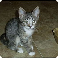Adopt A Pet :: Sasha - Mobile, AL