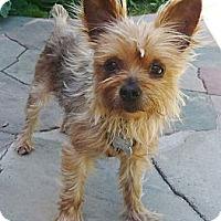 Adopt A Pet :: Peaches - Orange, CA