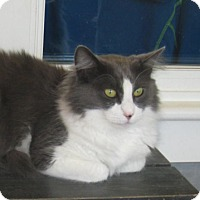 Adopt A Pet :: Kylie - Kingston, WA