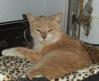 Domestic Shorthair Cat for adoption in Bear, Delaware - Louise