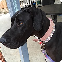 Adopt A Pet :: Rosie - Broomfield, CO